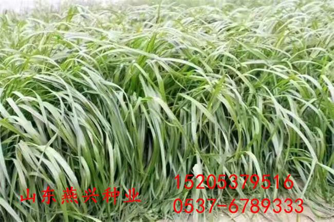 合肥市坡上种什么草好什么草能保持水土