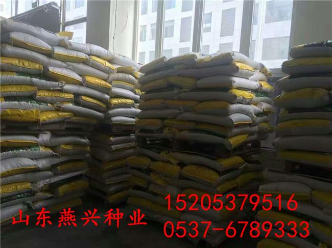 台州市种高羊茅做草坪好吗?