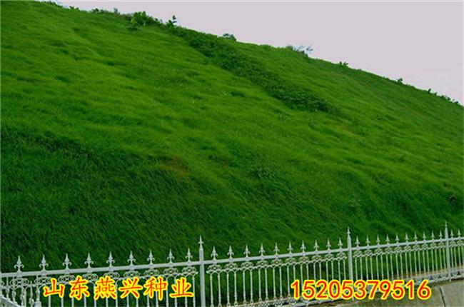 怒江什么地方有卖护坡草种子的
