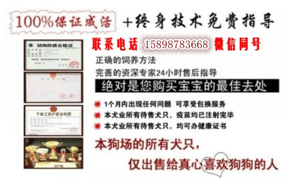 山西忻州偏关县哪里卖马犬