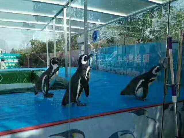 广元哪有出租海洋动物展的