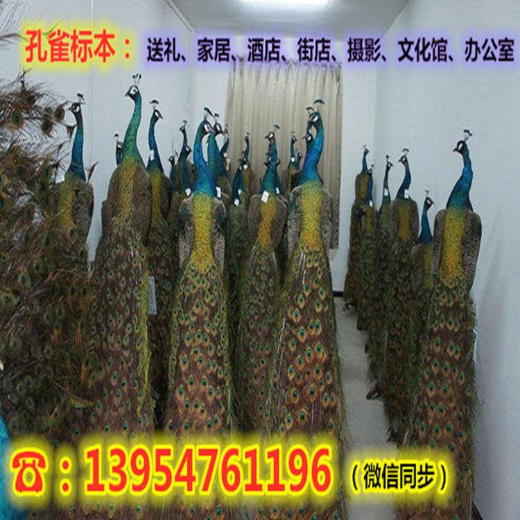 大关县哪里批发出售纯种野猪苗价格