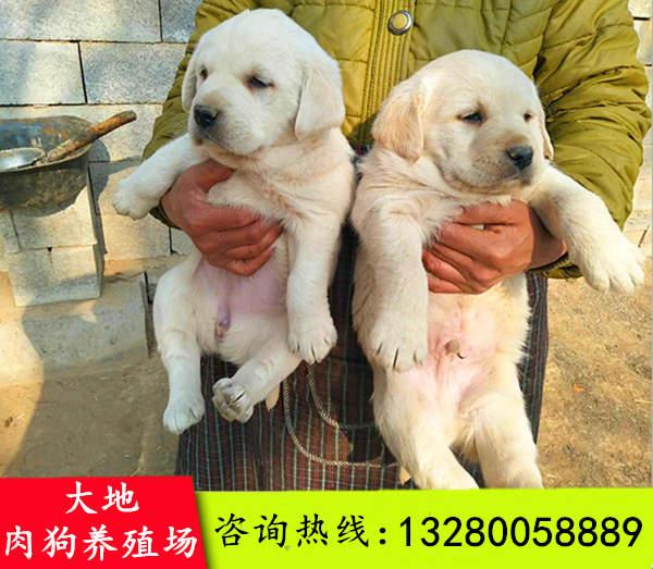 九寨沟县中国肉狗养殖利润大吗