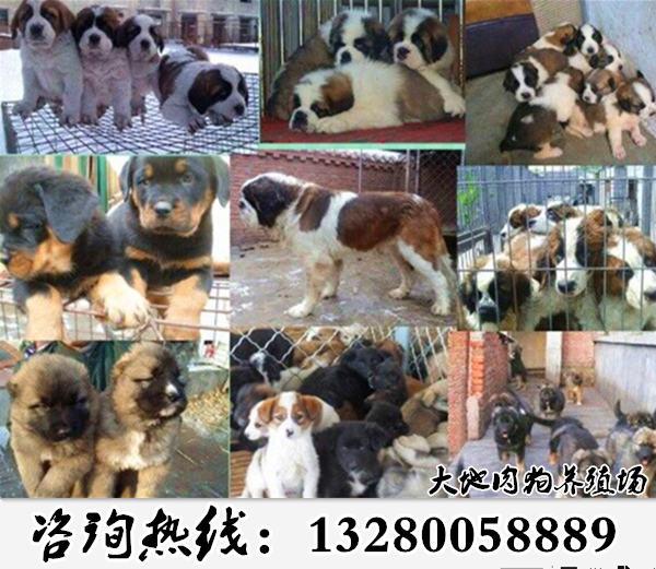 安岳县嘉祥肉狗场的具体地址详情