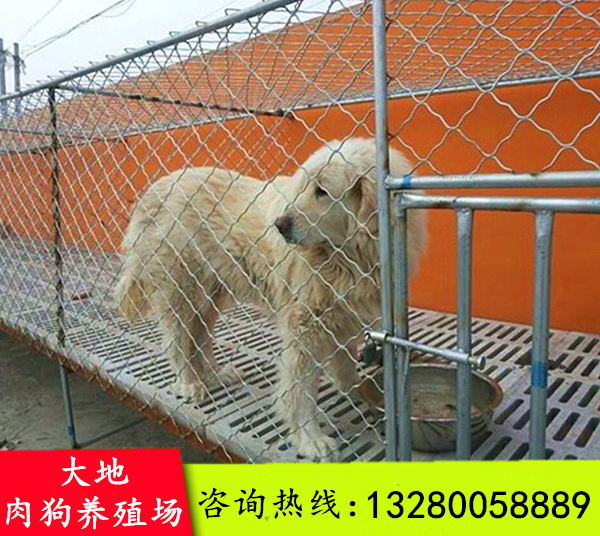 得荣县求购肉狗种苗出售技术培训好不好养