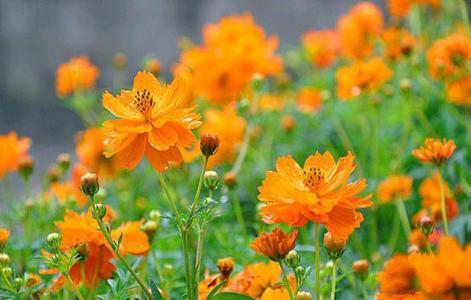 嘉禾打造花海景观公司