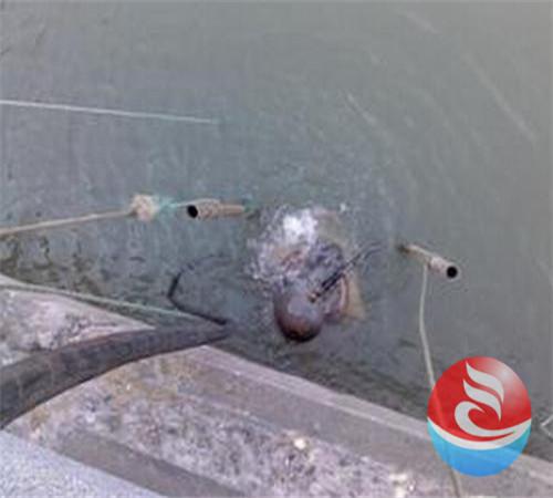宛城桥墩水下混凝土施工创新企业