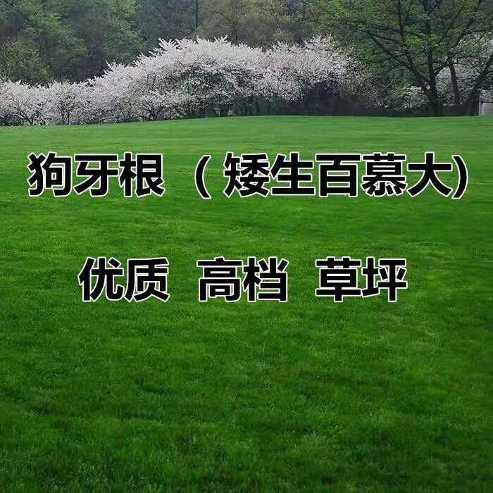 富阳市蓝香芥种子报价