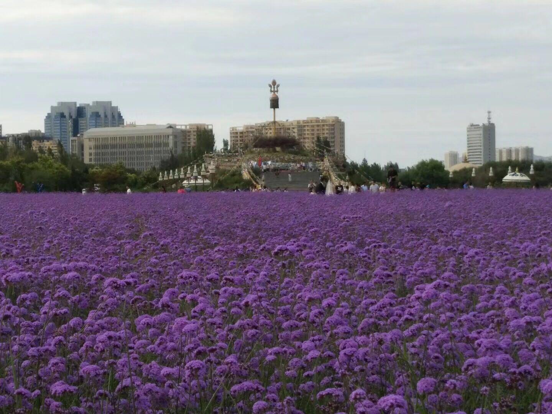 介绍下洪湖市四季野花种子价格