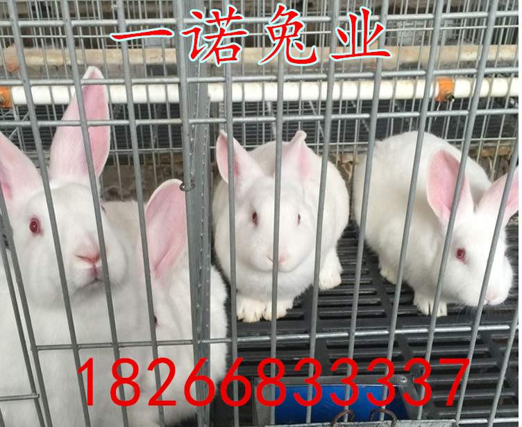 丘北哪里有兔子养殖场