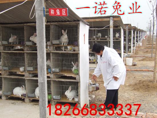 贵州肉兔养殖场