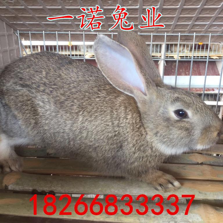 甘肃肉兔养殖场