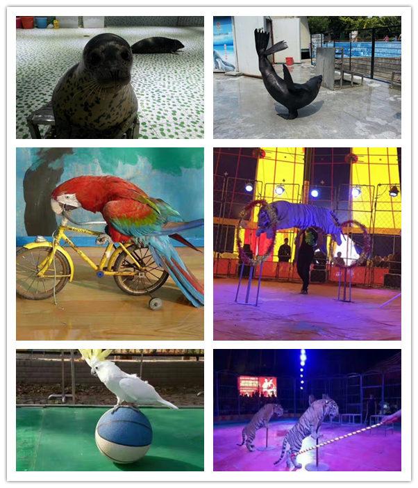 涿州市萌寵動物展出租節目類型多
