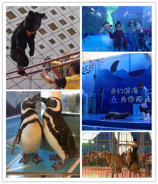 辽宁凌海海洋生物表演出租什么位置