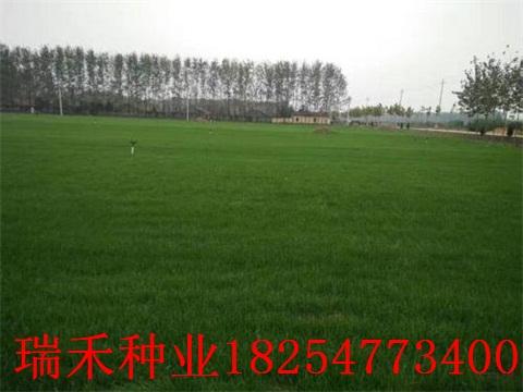 绿化护坡草种子坯种子粘合剂