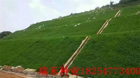 防土流失用什么護坡草種子保水劑