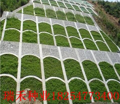 什么綠化草坪種子最長公園