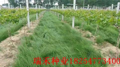 種草坪種子怎么用無紡布廠區