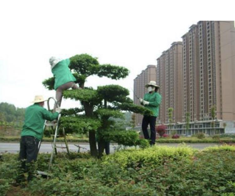 郴州春城園林綠化服務有限公司Logo