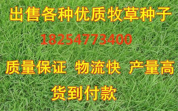 山东瑞禾种业有限公司