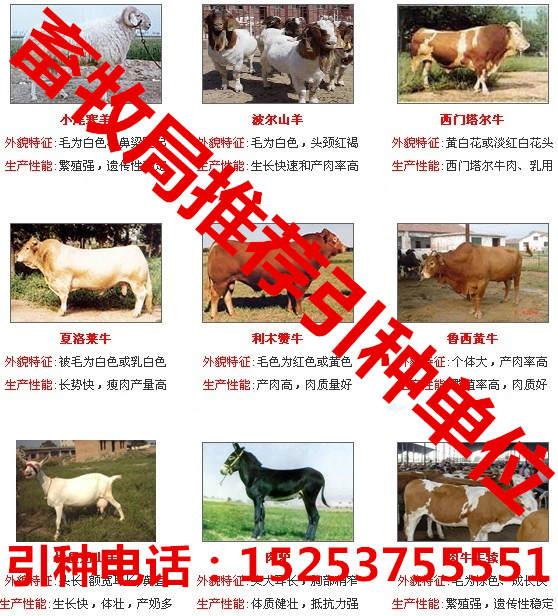 山东路达牧业牛羊驴养殖基地
