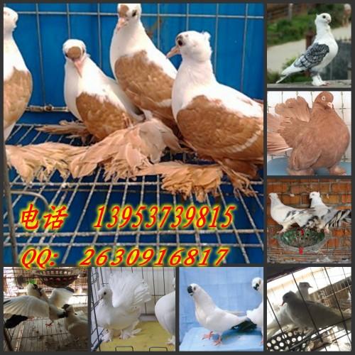河南安阳龙安区哪里有卖珍禽养殖基地的