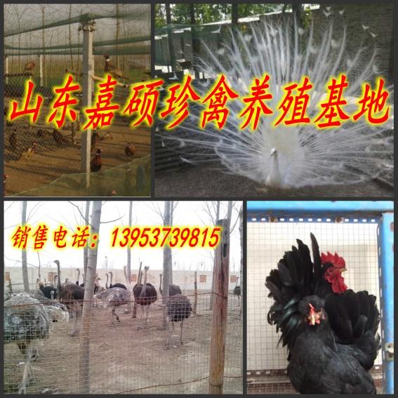 辽宁沈阳和平区哪里有卖元宝鸡的