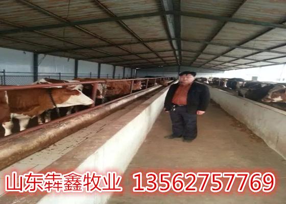 嘉祥县犇鑫牛羊养殖场