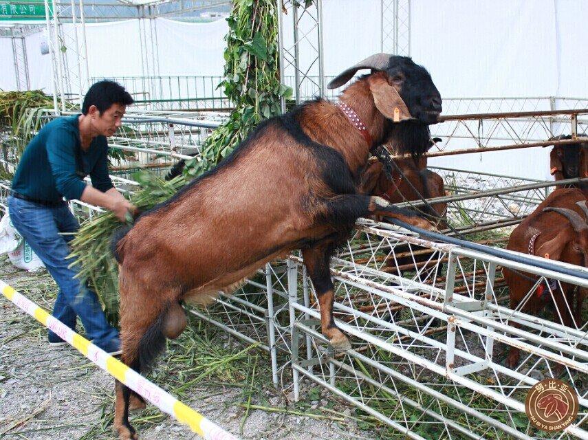 嘉祥縣順鴻牛羊養殖場