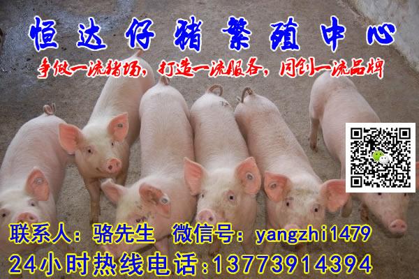 云南玉溪生猪价格今日猪价