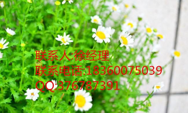 张家口市马尼拉草籽价格淮安市草种最新价格南通市草种最新价格湖北草坪草花种子出售