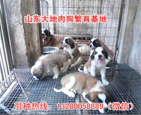 重庆时时彩开奖结果--综合体育用品网站肉狗苗价格肉狗前景
