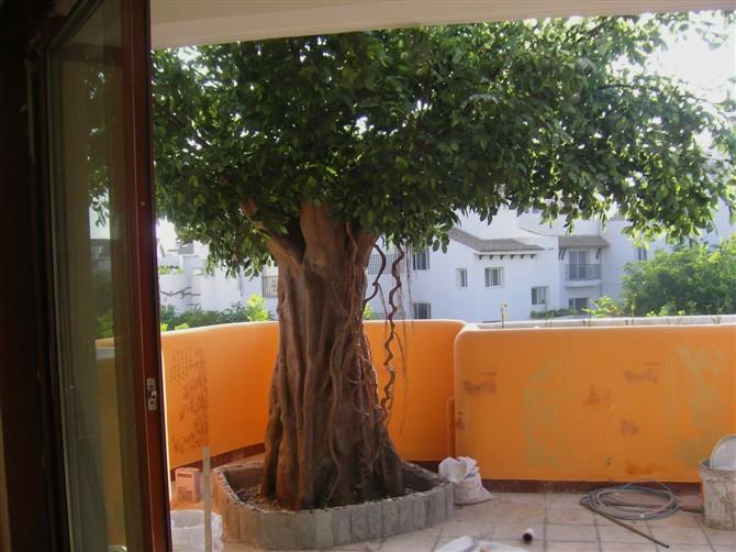 厂家定做假桃树北京仿真树定做厂家北京仿真树厂家