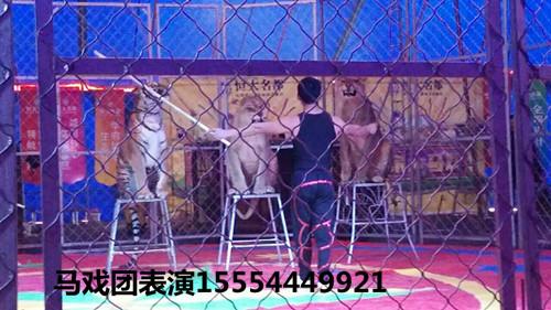洛阳市哪里有租赁大象表演的企鹅展租赁海洋展租赁马戏狮虎表演租赁