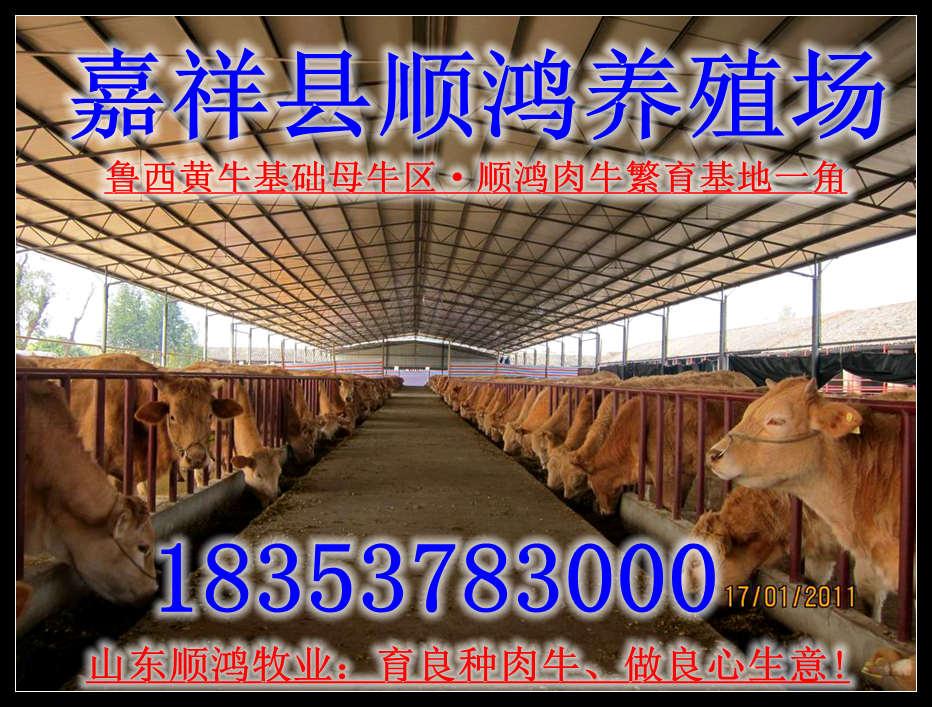 蘭州小型養牛場