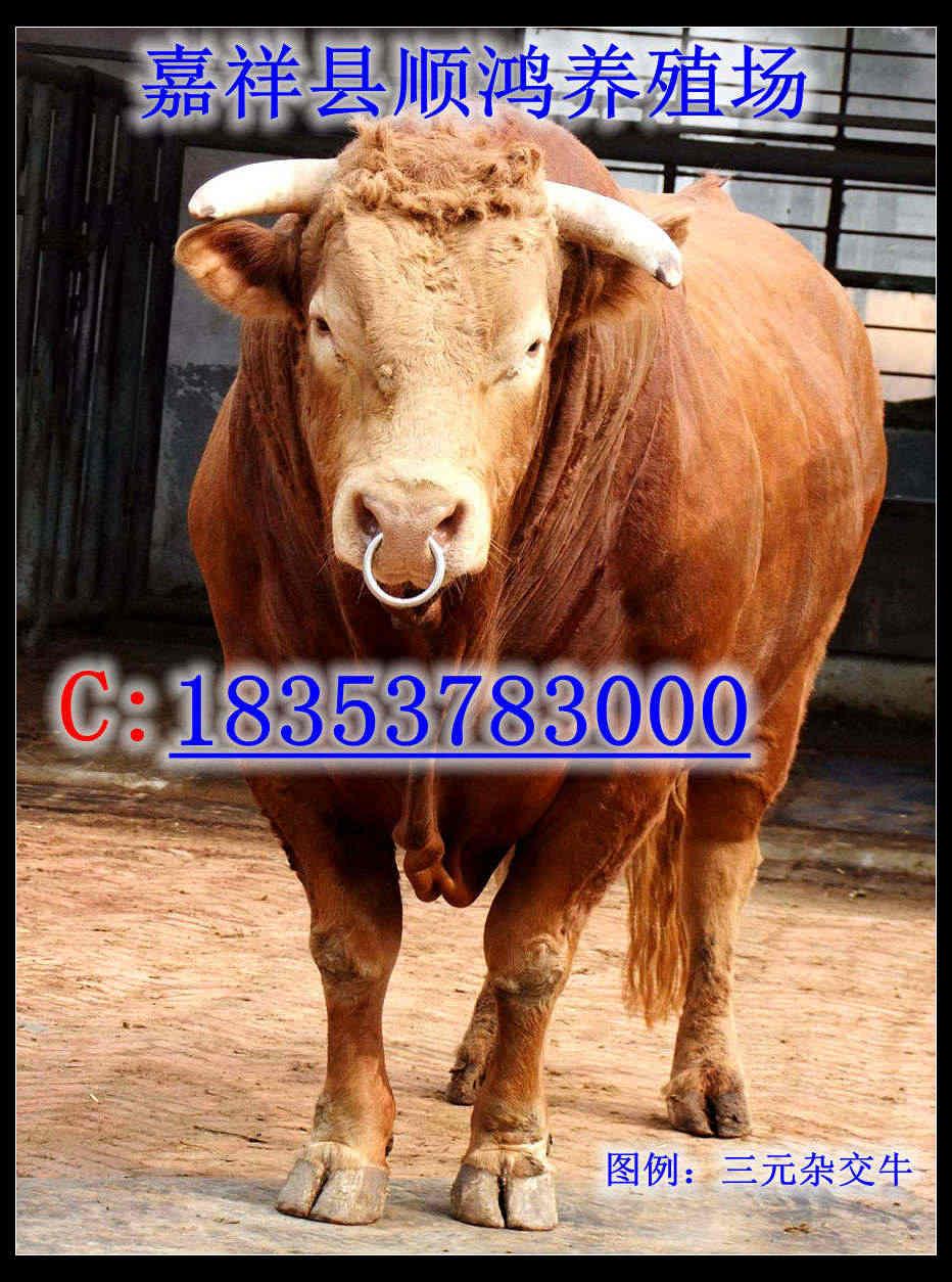 牙克石养牛成本与利润