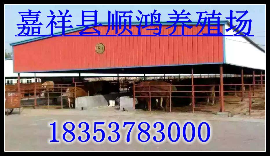 扎兰屯关于养牛