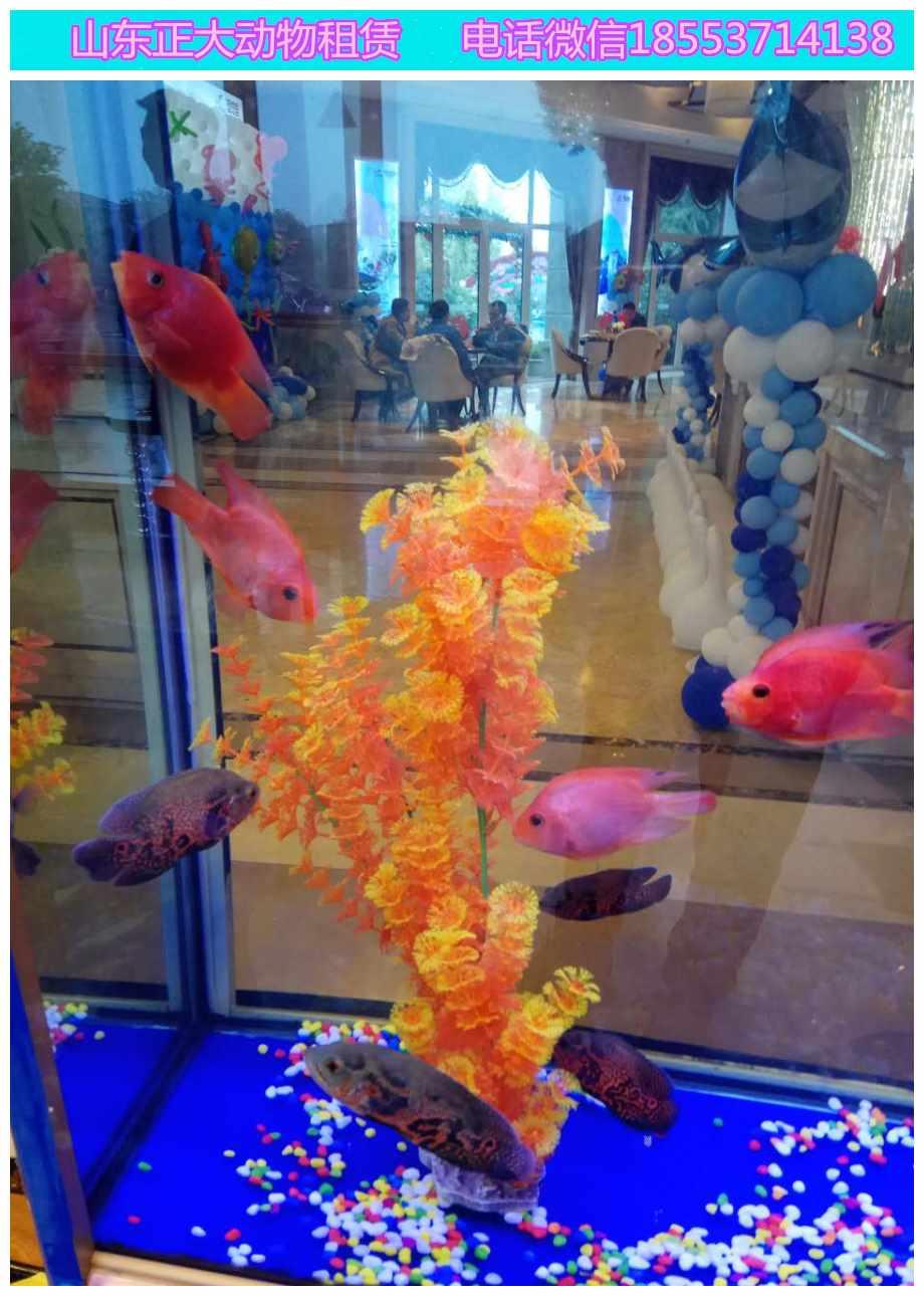 信州区海狮表演精彩节目萌宠暖场哪里有羊驼蝴蝶展览海狮表演  马戏马戏团  海狮鱼缸展览  海狮