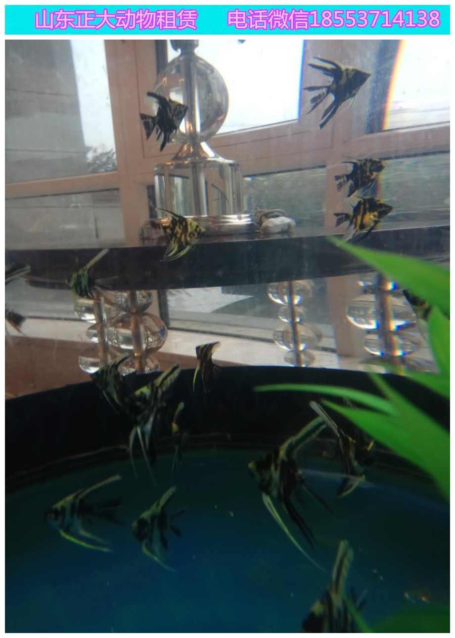 仪征海洋鱼缸展览价格企鹅海狮互动海狮展览互动价格海狮表演  马戏马戏团  海狮鱼缸展览  海狮