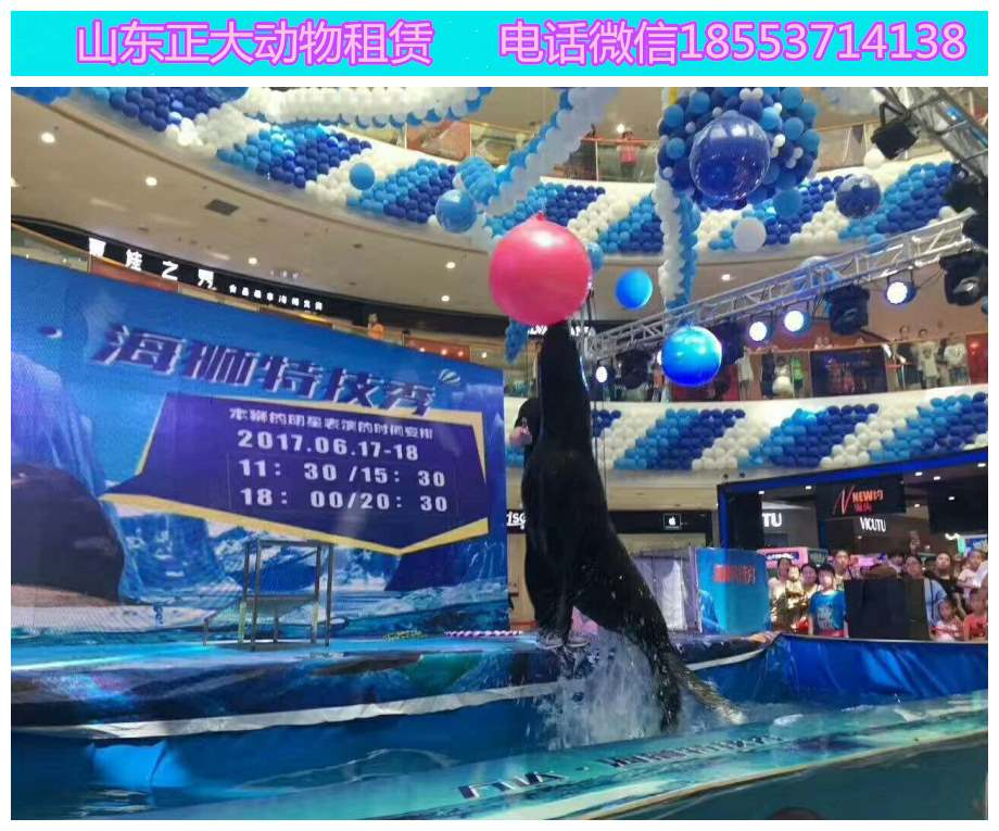 义乌小马戏表演互动羊驼展览百鸟展览价格孔雀展览海狮表演  马戏马戏团  海狮鱼缸展览  海狮