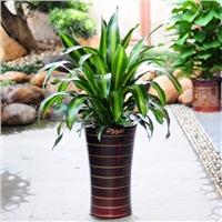 爱尚花境供应优质的厦门绿植公司,纵享高品质花木管家养护