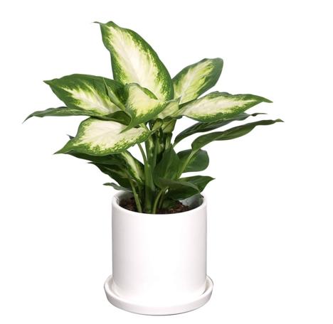 厦门植物租赁超值体验,让您购爽厦门植物租摆
