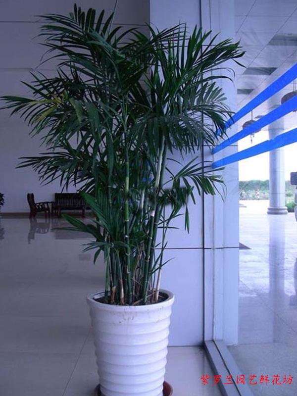 重庆专业鲜花配送服务推荐_超值的鲜花配送紫罗兰鲜花配送