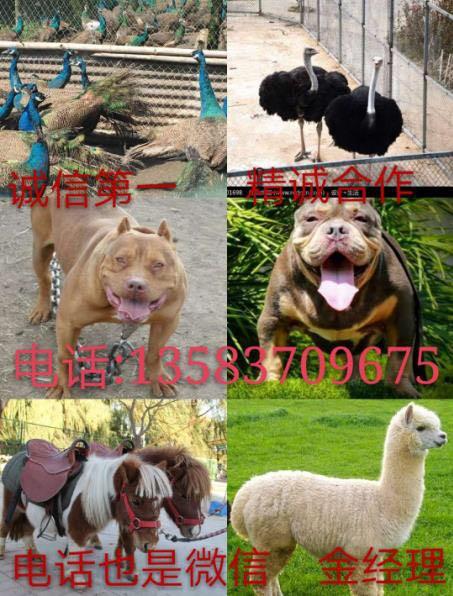 济宁市任城区君达犬养殖中心