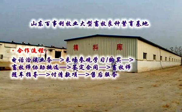 云南丽江永胜县种驴养殖基地