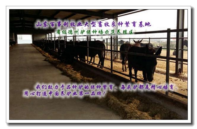 巴音郭楞小毛驴养殖基地