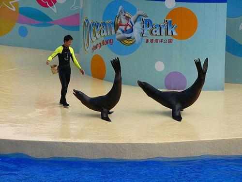 方城鳄鱼表演出租海洋节展览租赁