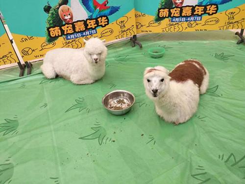 东湖区动物表演出租萌宠动物展览出租