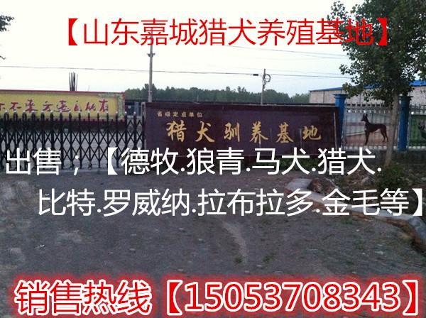 山东济宁嘉城特种养殖