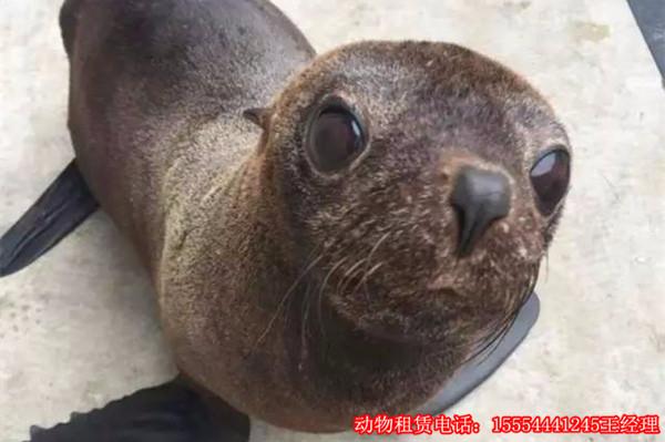 海狮表演租赁一天多少钱荆门